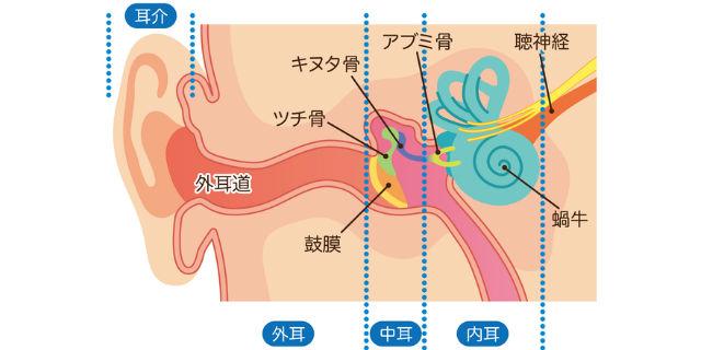 内耳の仕組み