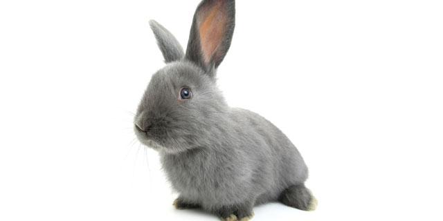 ウサギを飼いたい…!はじめてウサギを飼うとき知っておきたいこと
