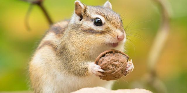 リスは既に知っていたかも?「ナッツ」は栄養・美容に効果抜群!