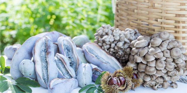 本当は恐ろしい山の幸…有毒のキノコや山菜を知ってますか?