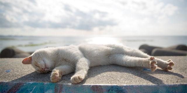 睡眠中にビクっとなる「ジャーキング」はストレスが原因って本当?