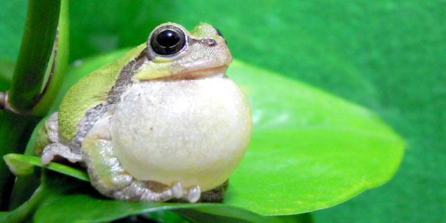 元AKB川栄李奈「ガマ腫」の疑い!? 顎がカエルのように膨らむ症状とは