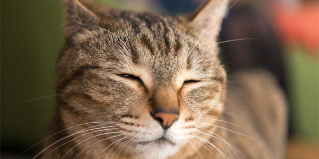 【猫の死因 第1位】腎不全の原因が解明!猫の寿命を延ばす可能性を示唆