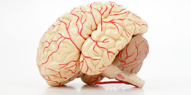ノンスタ井上 大動脈二尖弁が発覚!人間ドックSPで判明した5人の症状