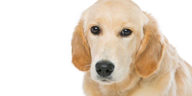 獣医おすすめ!健康効果が高い犬猫ベスト3 ペットと健康寿命の密接な関係