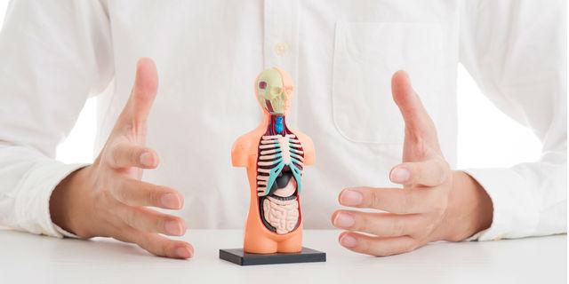 脾臓はマイナー臓器なんかじゃない 実は重要な働きと関わる病気を知ろう!