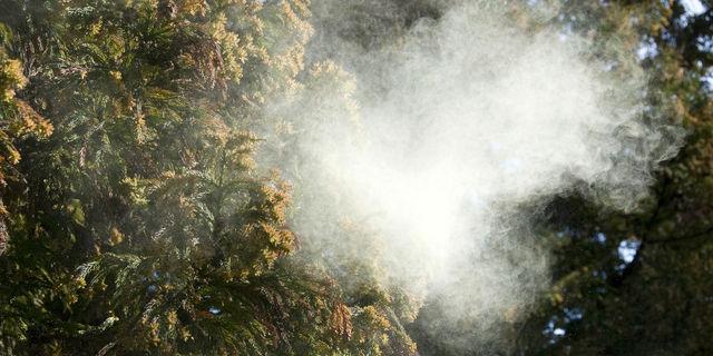 《2017年》花粉流行速報!最新の飛散予測とピーク時期を徹底ガイド